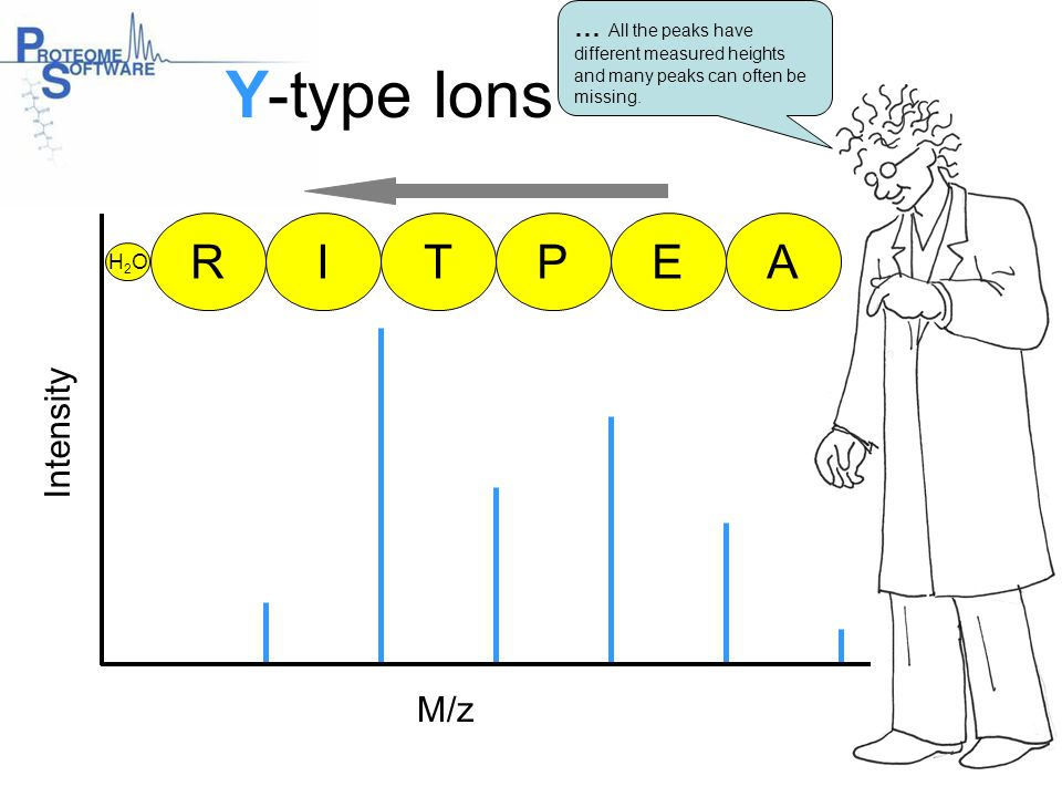 Y-type Ions R I T P E A Intensity M/z