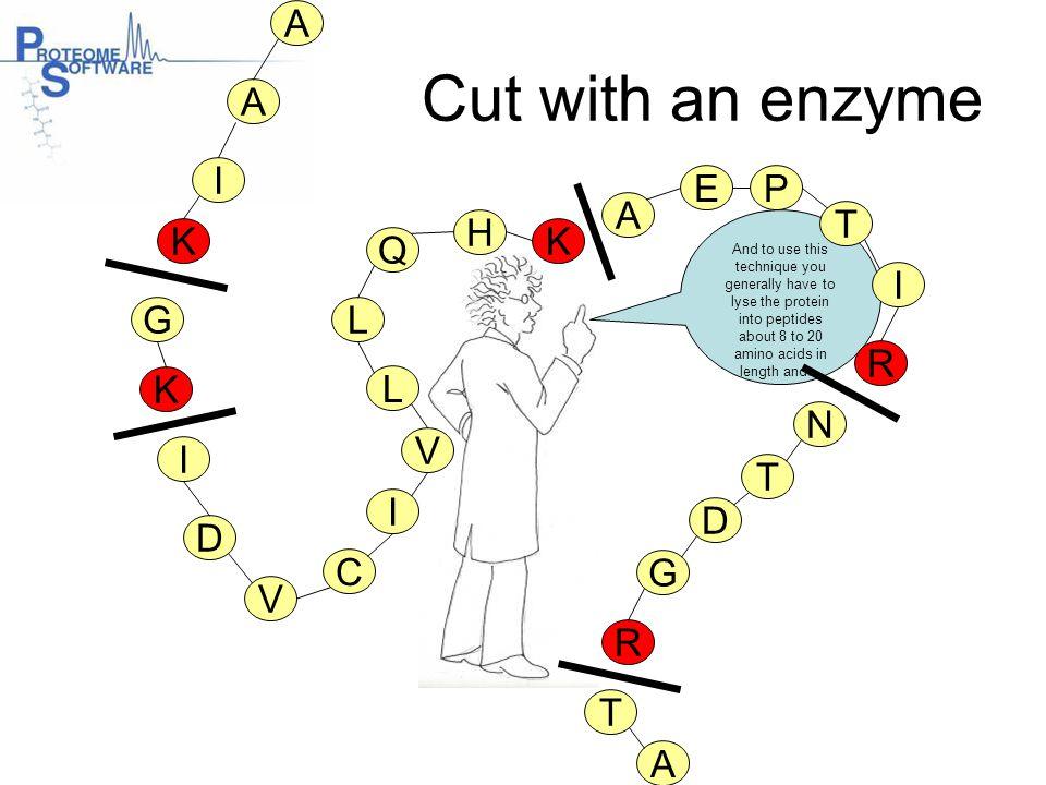 Cut with an enzyme A A I E P A T H K K Q I G L R K L N V I T I D D C G