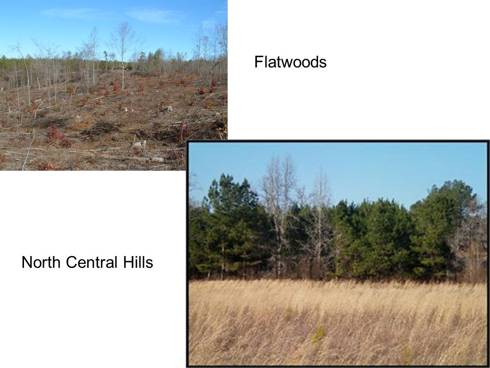 Flatwoods North Central Hills