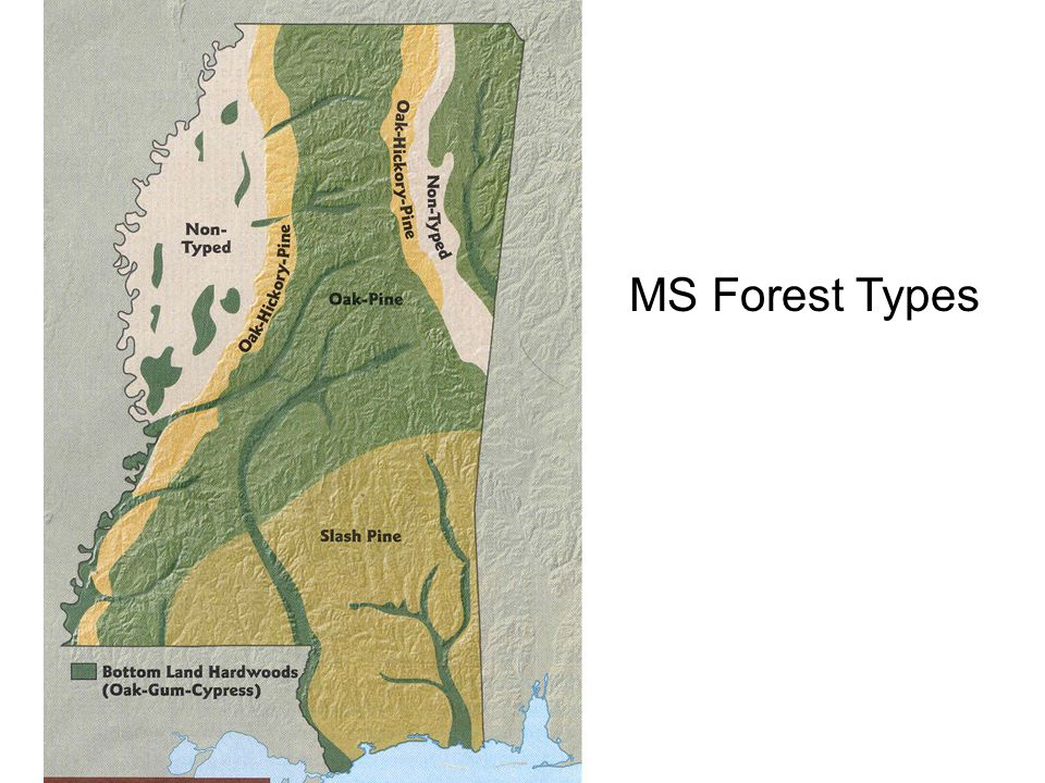 MS Forest Types