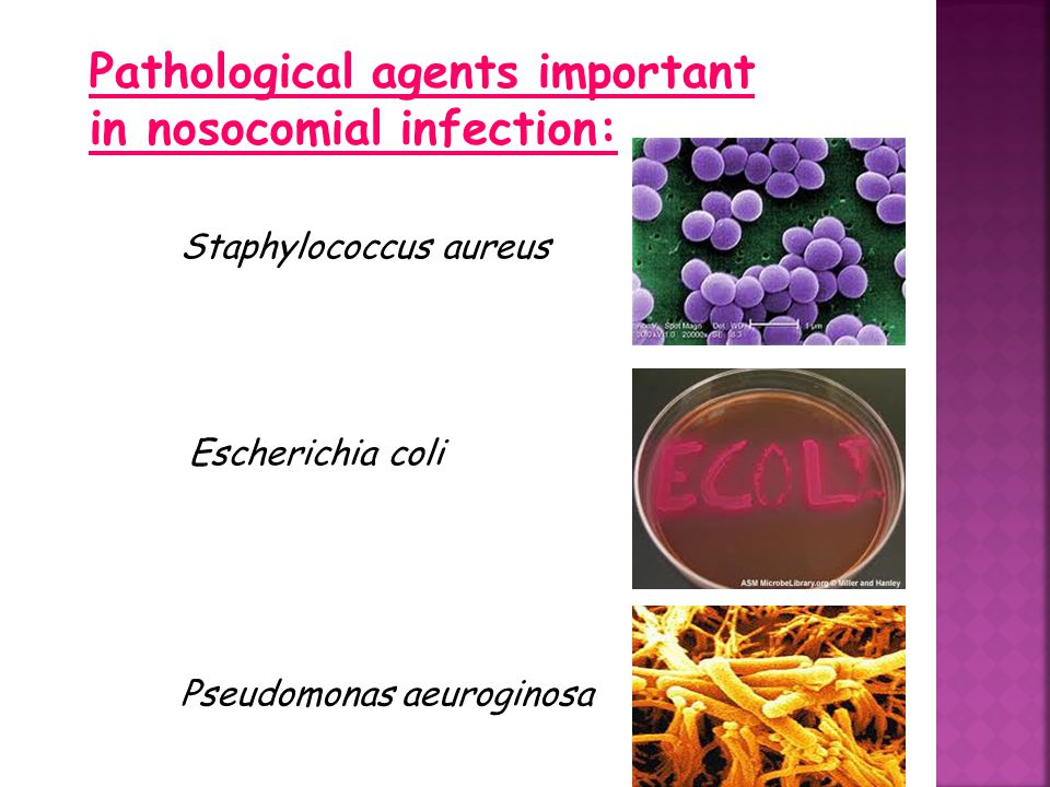 Pathological agents important in nosocomial infection: