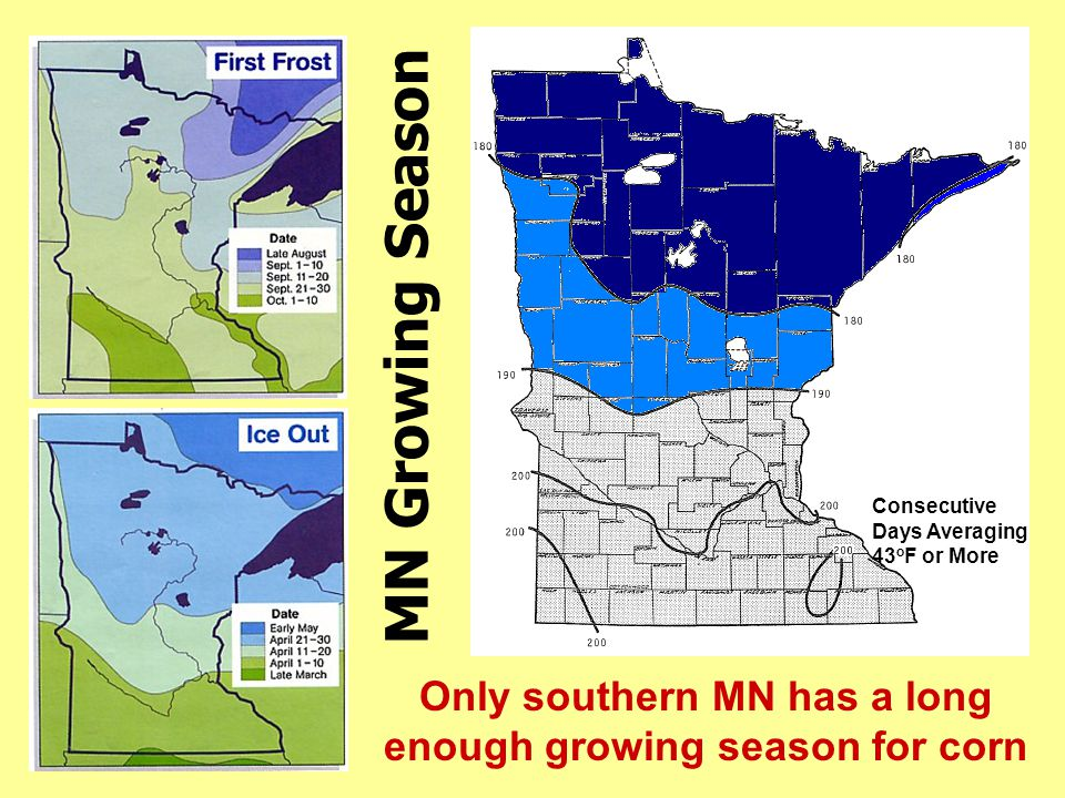 Only southern MN has a long enough growing season for corn