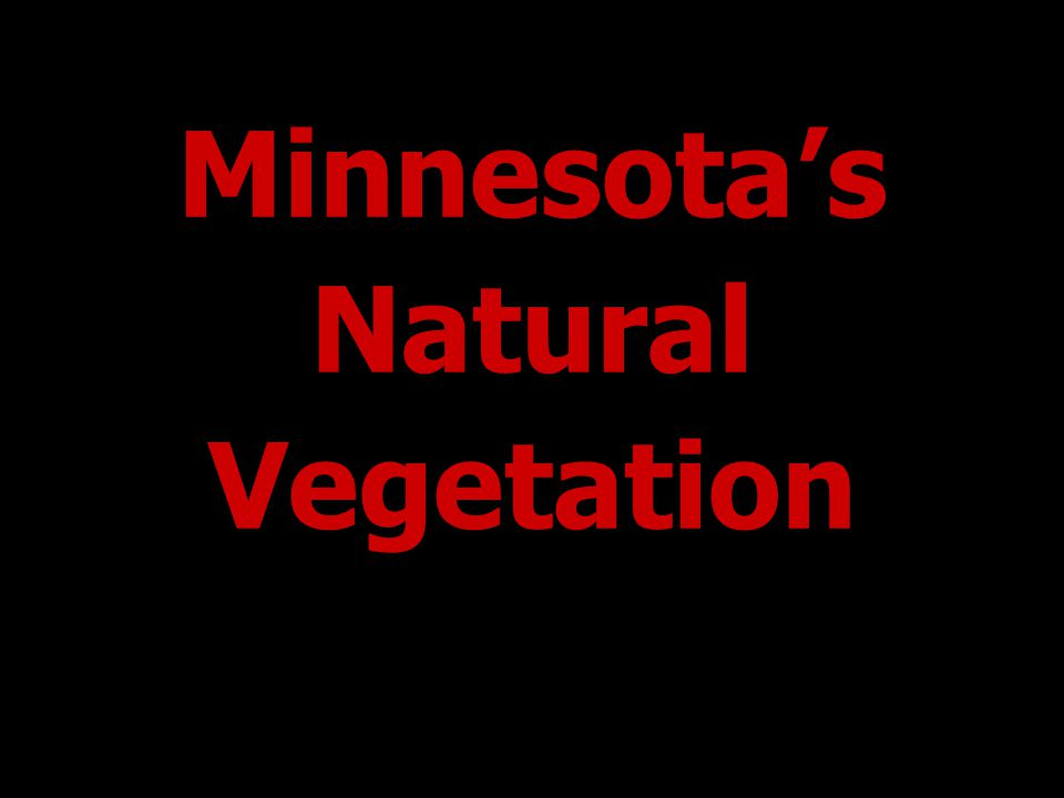 Minnesota's Natural Vegetation