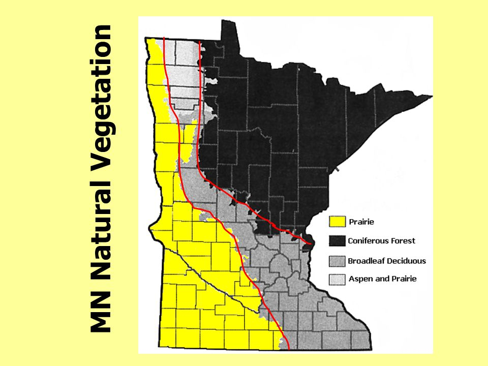 MN Natural Vegetation