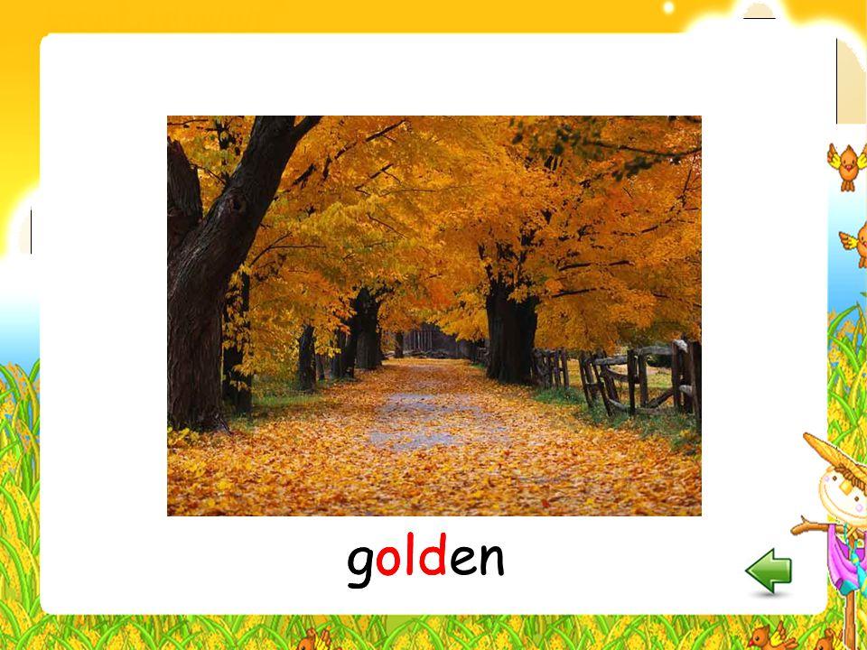 golden golden golden