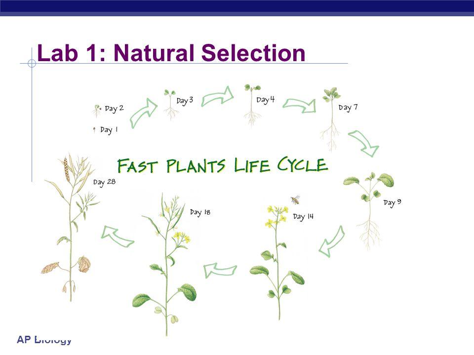 Lab 1: Natural Selection