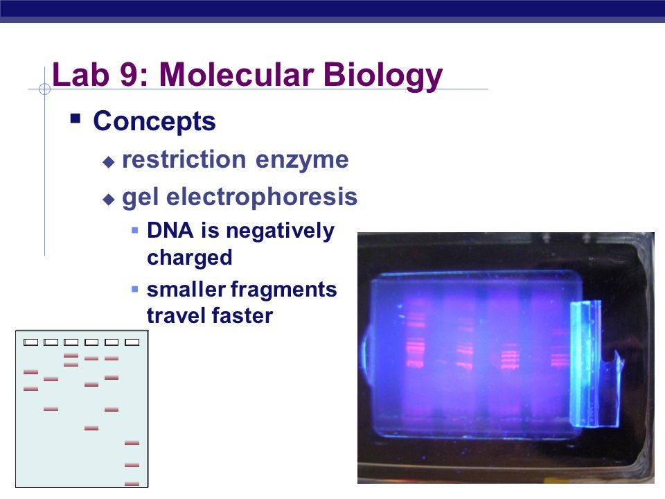 Lab 9: Molecular Biology