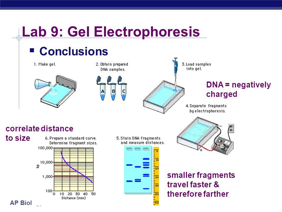 Lab 9: Gel Electrophoresis