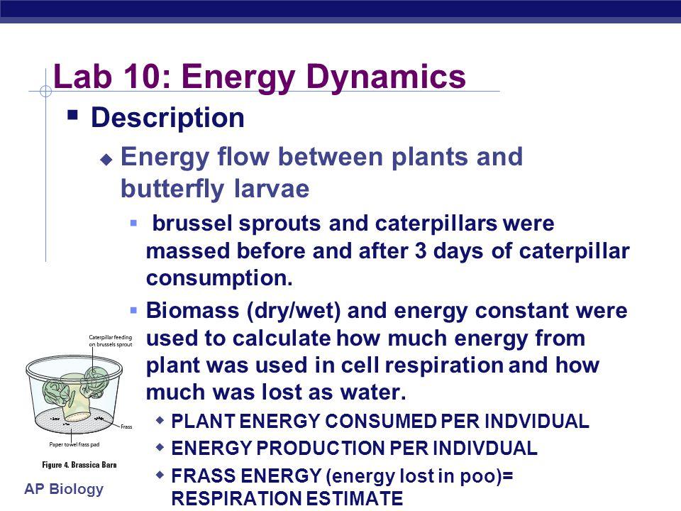Lab 10: Energy Dynamics Description