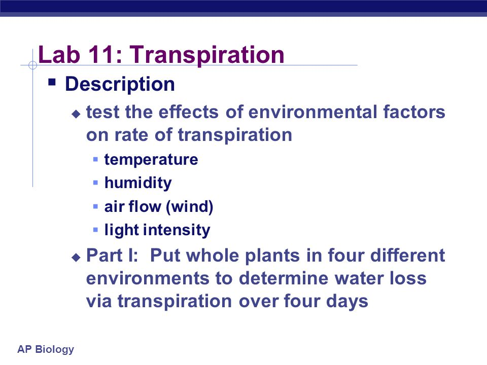 Lab 11: Transpiration Description
