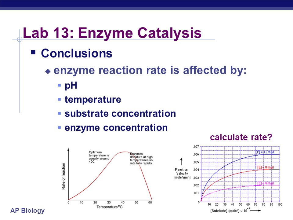 Lab 13: Enzyme Catalysis Conclusions