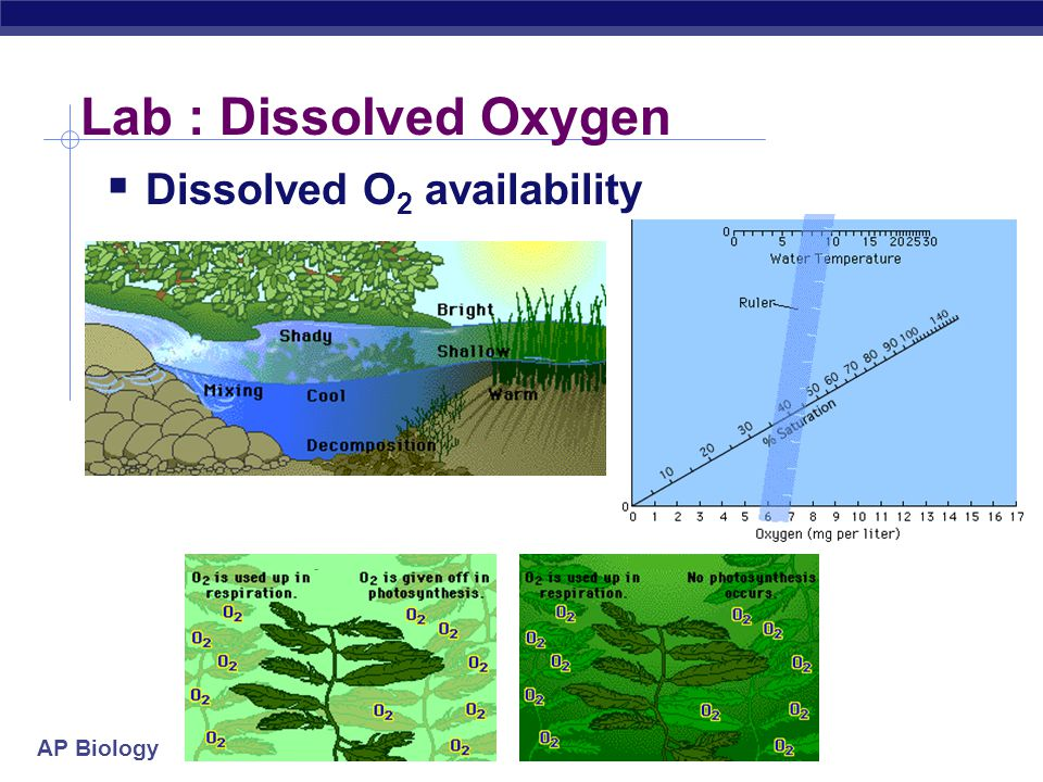Lab : Dissolved Oxygen Dissolved O2 availability