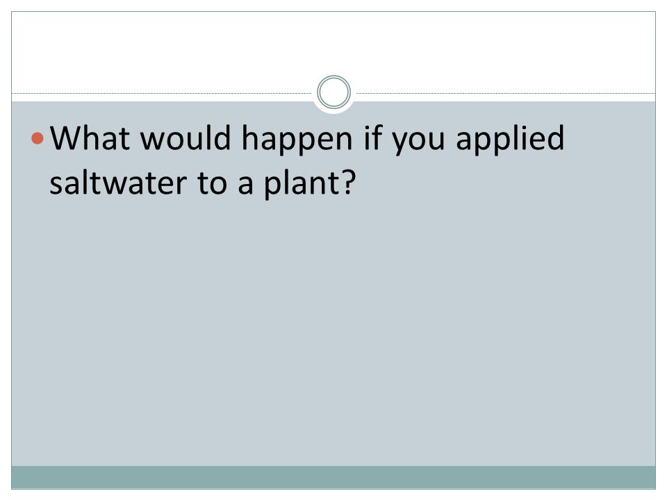 What would happen if you applied saltwater to a plant