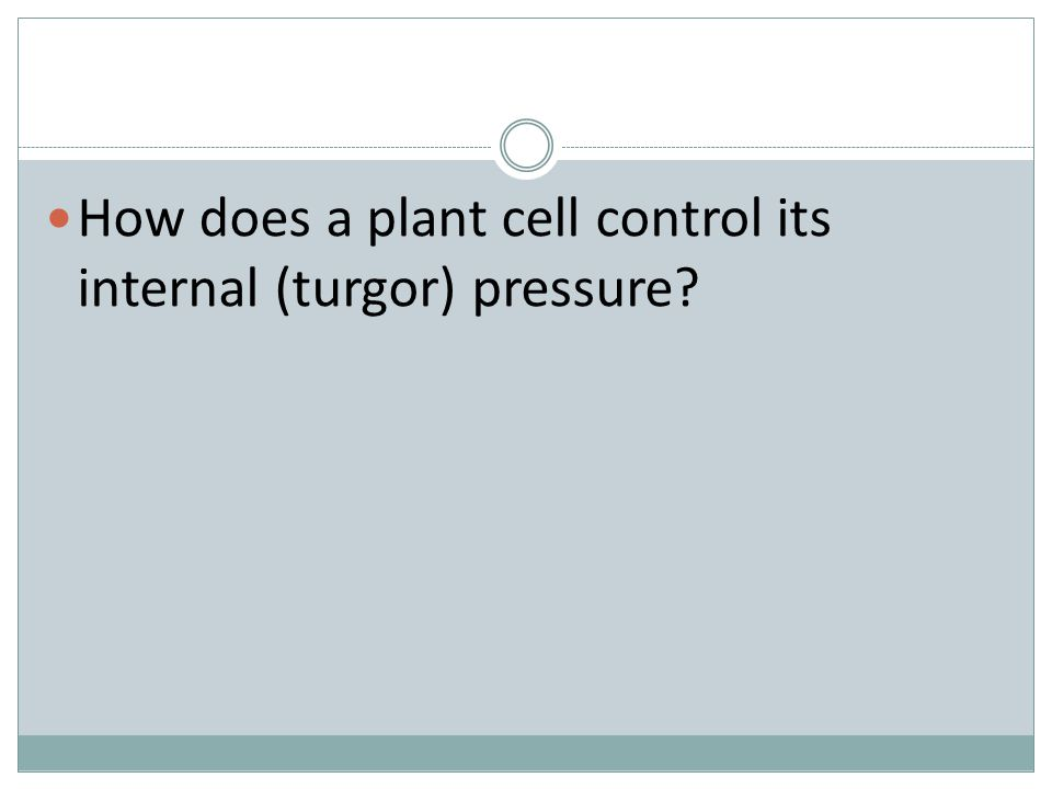 How does a plant cell control its internal (turgor) pressure