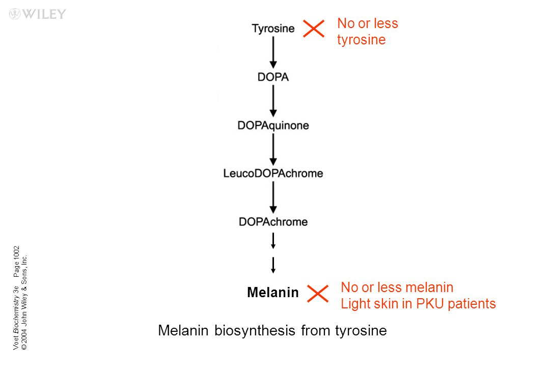 Melanin biosynthesis from tyrosine