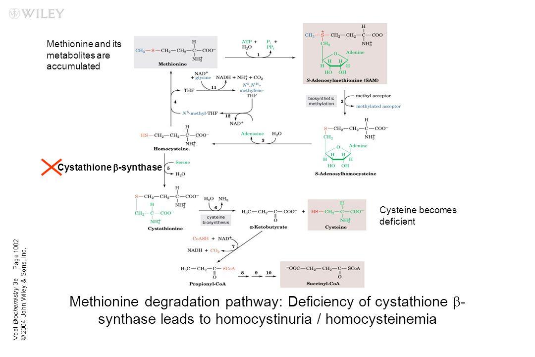 Cystathione b-synthase