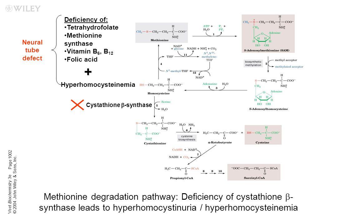 Hyperhomocysteinemia Cystathione b-synthase