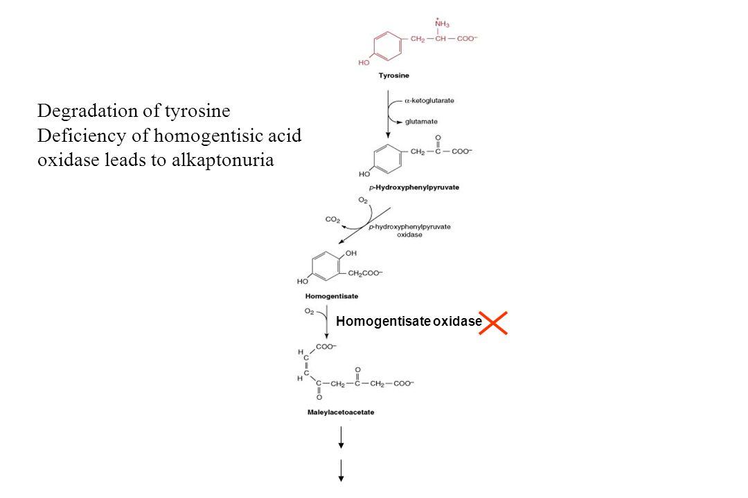 Homogentisate oxidase