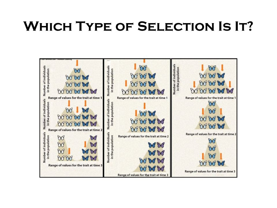 Which Type of Selection Is It