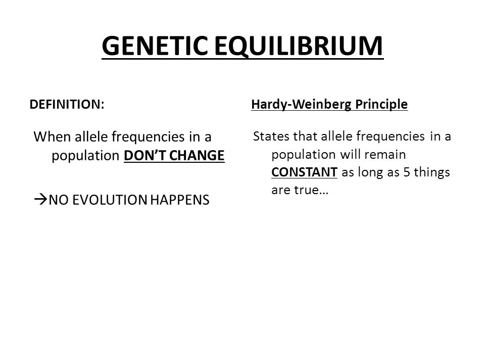 GENETIC EQUILIBRIUM DEFINITION: Hardy-Weinberg Principle. When allele frequencies in a population DON'T CHANGE NO EVOLUTION HAPPENS