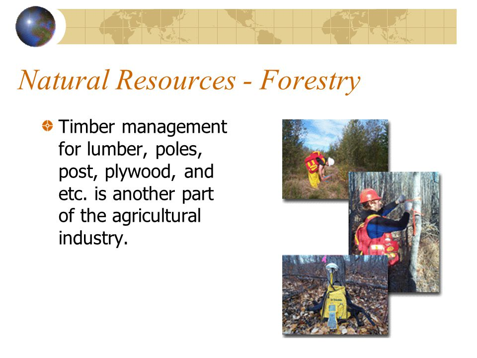 Natural Resources - Forestry