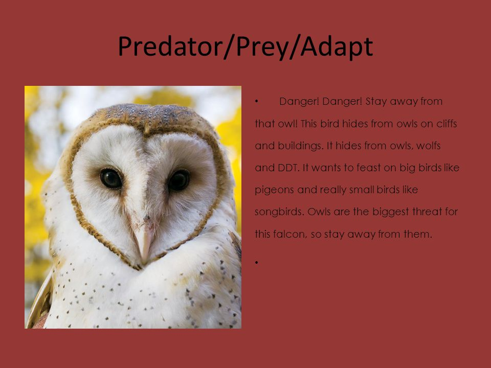 Predator/Prey/Adapt