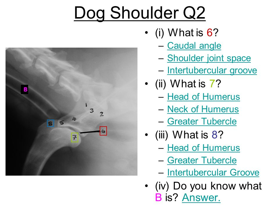 Dog Shoulder Q2 (i) What is 6 (ii) What is 7 (iii) What is 8