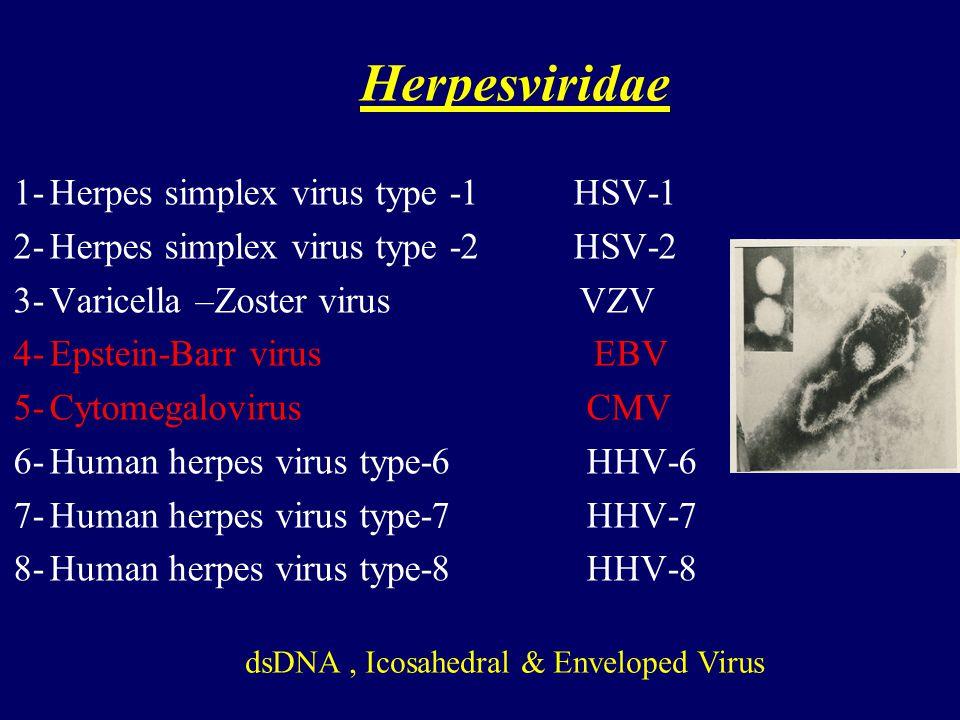 dsDNA , Icosahedral & Enveloped Virus