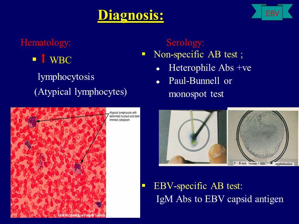 Hematology: Serology: