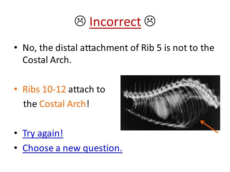  Incorrect  No, the distal attachment of Rib 5 is not to the Costal Arch. Ribs 10-12 attach to. the Costal Arch!