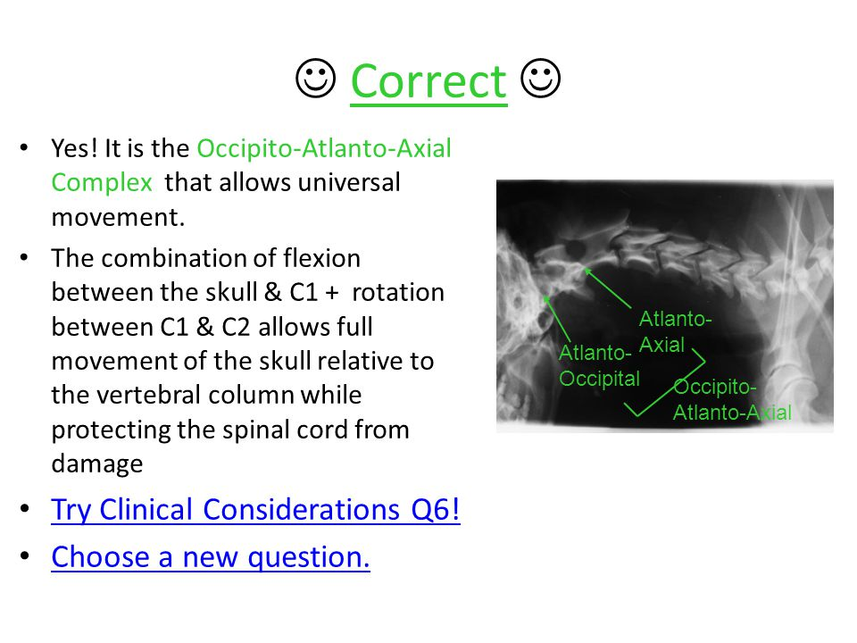  Correct  Try Clinical Considerations Q6! Choose a new question.