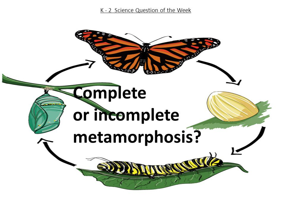 K - 2 Science Question of the Week
