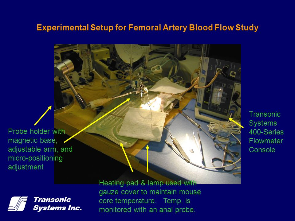 Experimental Setup for Femoral Artery Blood Flow Study