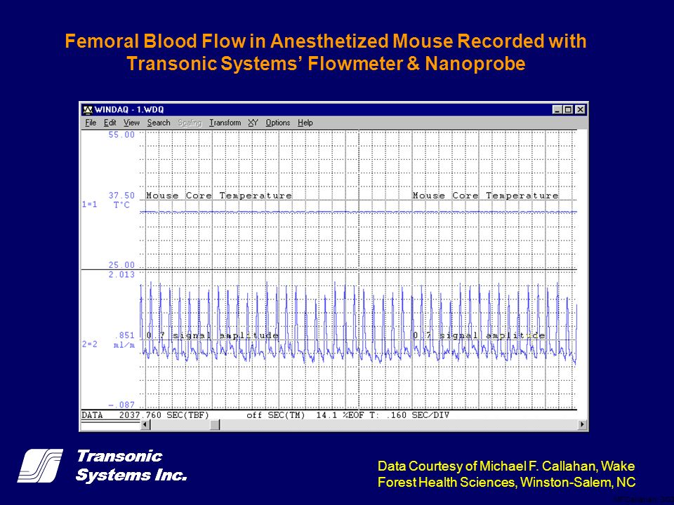Femoral Blood Flow in Anesthetized Mouse Recorded with Transonic Systems' Flowmeter & Nanoprobe