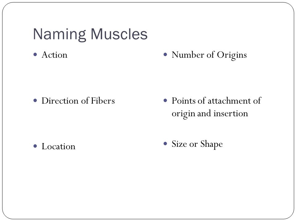 Naming Muscles Action Direction of Fibers Location Number of Origins