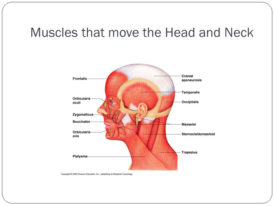 Muscles that move the Head and Neck