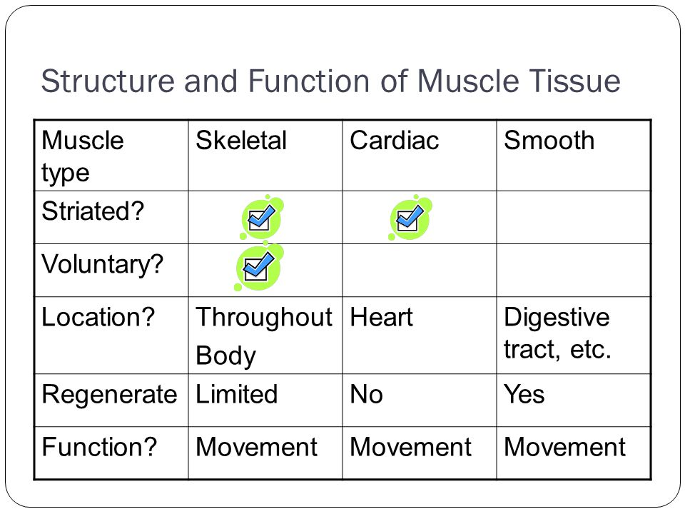 Structure and Function of Muscle Tissue