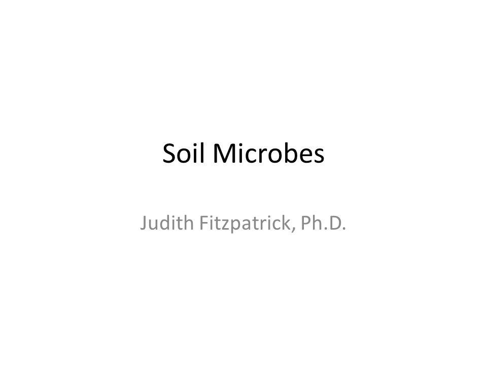Judith Fitzpatrick, Ph.D.