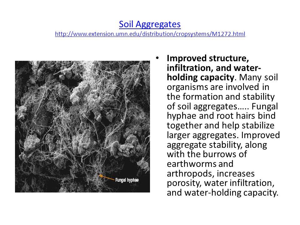 Soil Aggregates http://www. extension. umn