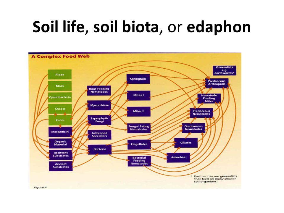Soil life, soil biota, or edaphon