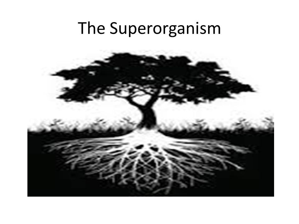 The Superorganism