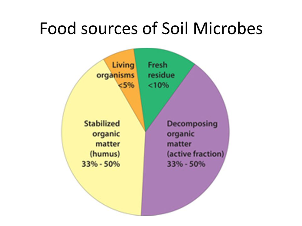 Food sources of Soil Microbes