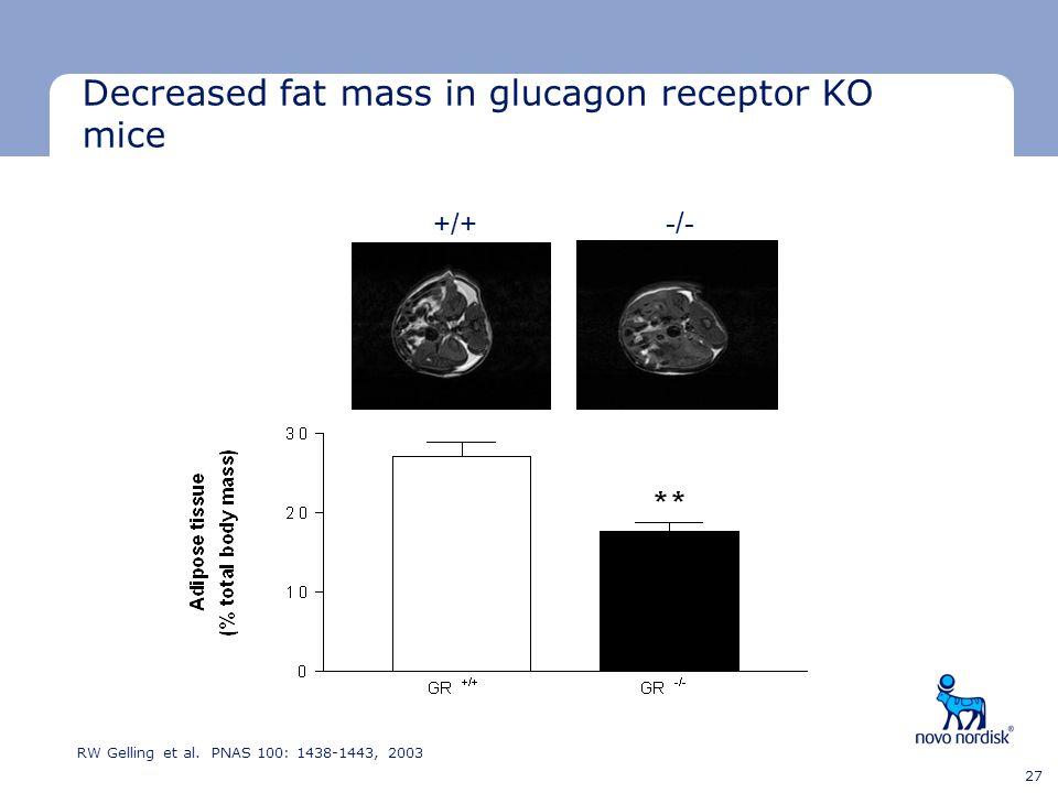 Decreased fat mass in glucagon receptor KO mice