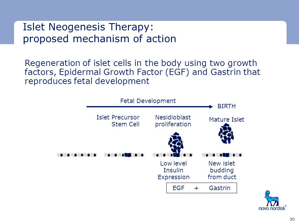 Islet Neogenesis Therapy: proposed mechanism of action