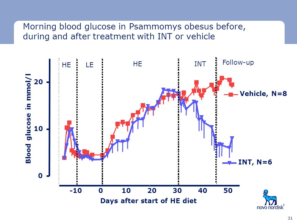 Morning blood glucose in Psammomys obesus before, during and after treatment with INT or vehicle