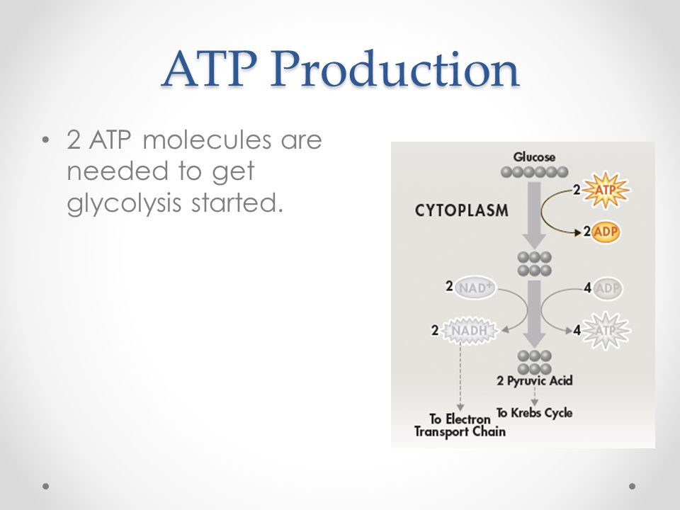 ATP Production 2 ATP molecules are needed to get glycolysis started.