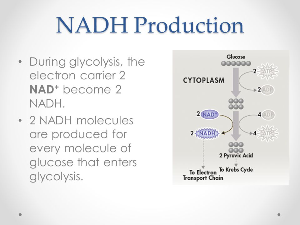 NADH Production During glycolysis, the electron carrier 2 NAD+ become 2 NADH.