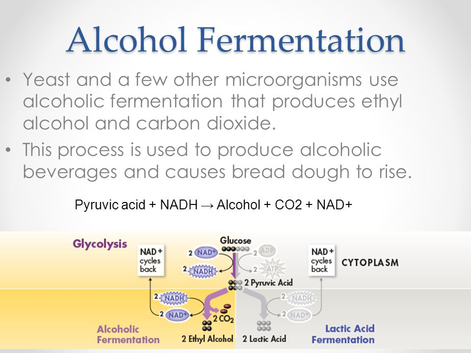 Alcohol Fermentation Yeast and a few other microorganisms use alcoholic fermentation that produces ethyl alcohol and carbon dioxide.