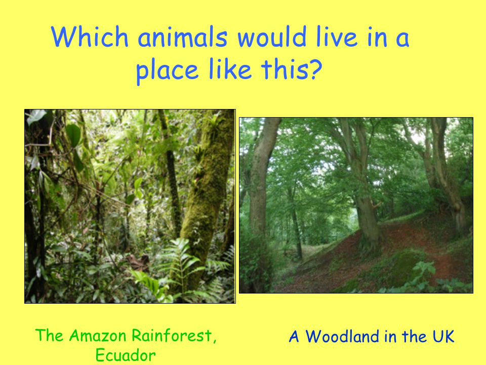 Which animals would live in a place like this