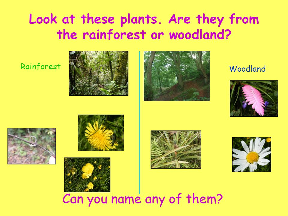Look at these plants. Are they from the rainforest or woodland
